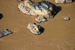 Crocodile at sunbed in Awash river | Krokokil im Awash-Fluss